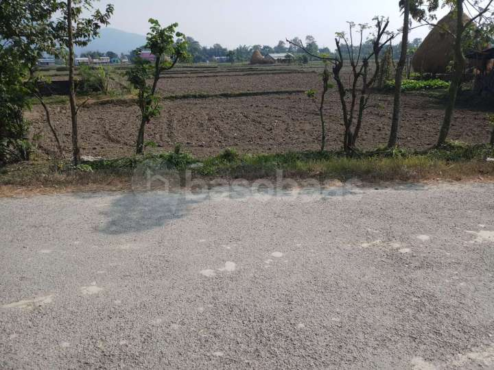 Land for Sale in Sauraha