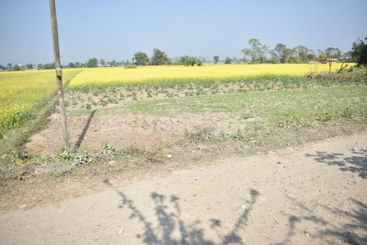Land on Sale at Sauraha