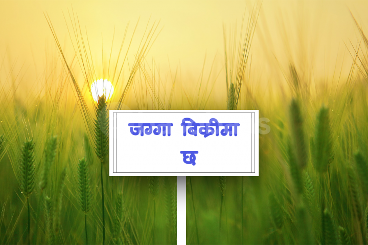 Land on Sale at Ichhya Nagar