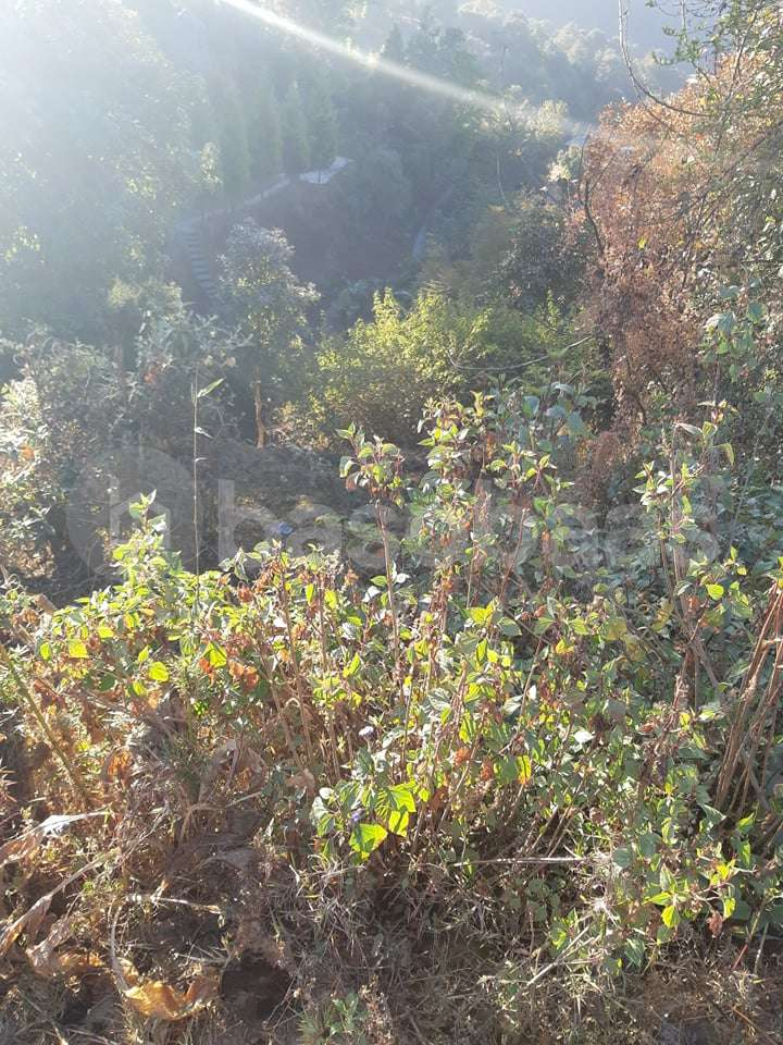 Land for Sale in Nagarkot