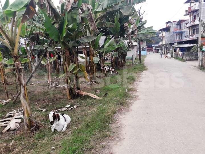 Land for Sale in Chitwan