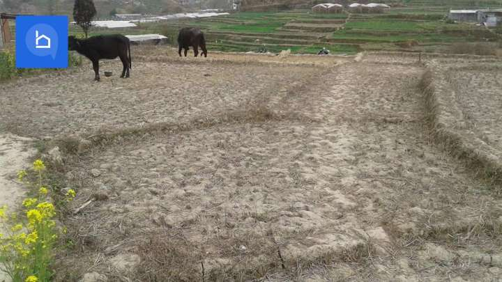 Land for Sale in Dhapakhel