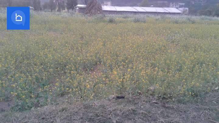 Land for Sale in Taukhel