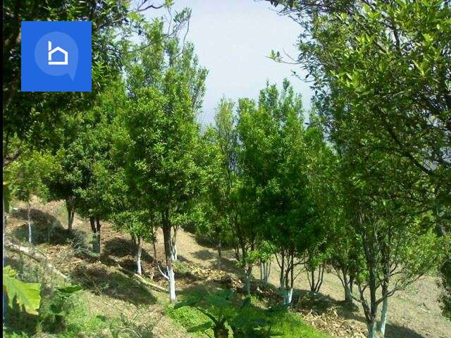 Land for Sale in Dhading