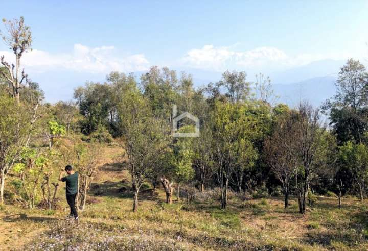 Land for Sale in Kamalpokhari