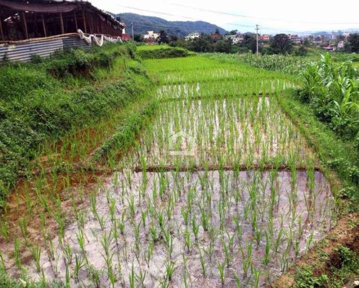 Land for Sale in Sipadol