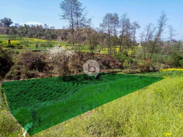 Land for Sale in Chitapol