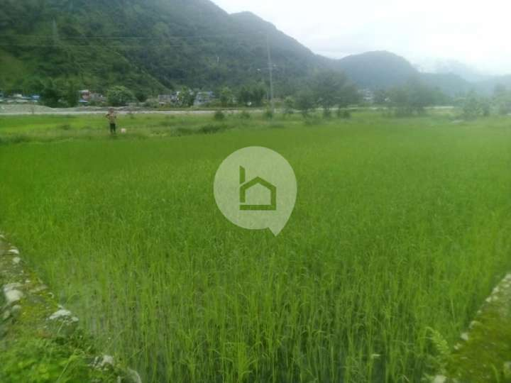 Land for Sale in Hemja