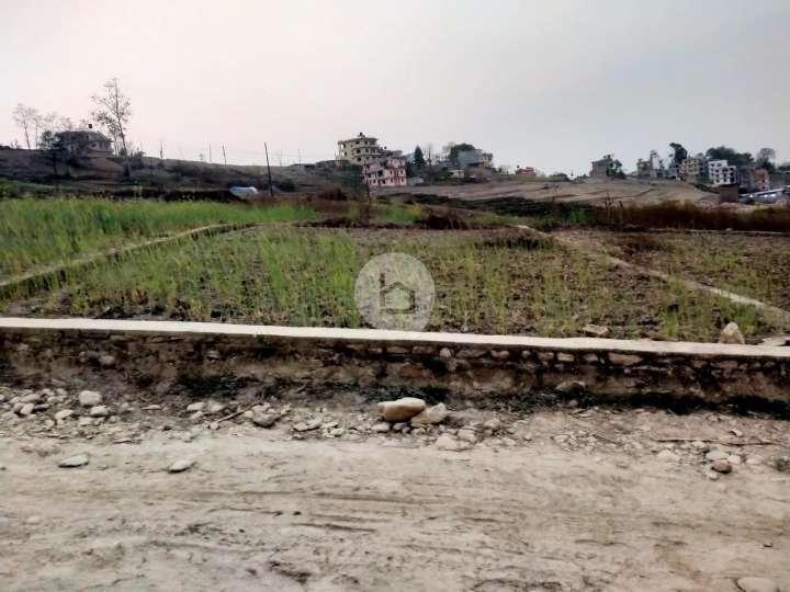 Land for Sale in Dadikot