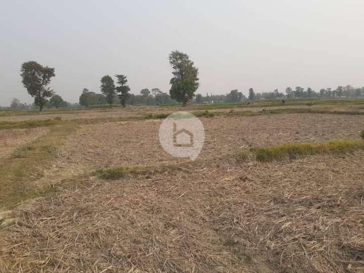 Land for Sale in Katahari