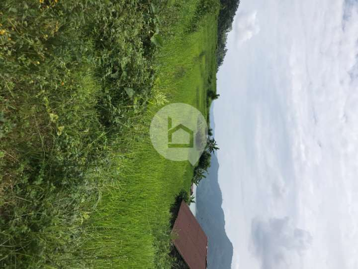 Land for Sale in Pame