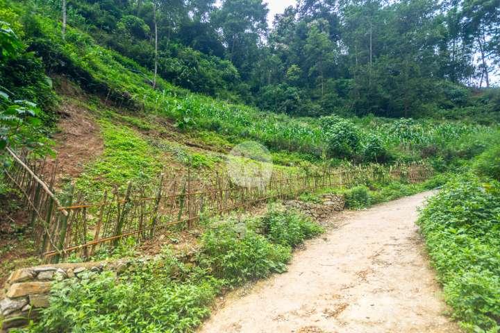 Land for Sale in Halchowk